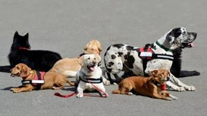 Dogs Supporting Individuals on the Autism Spectrum By Toneya Ashby, Psychologist